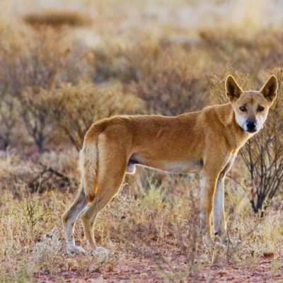 Best Ways To Handle And Manage Wild Dogs