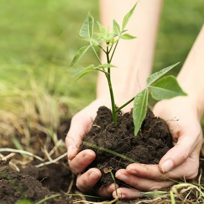 8 Health Benefits of Growing Trees in Your Yard