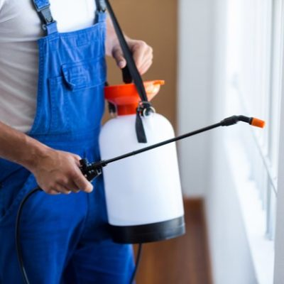 4 Top Benefits of Enlisting Professional Pest Control Services
