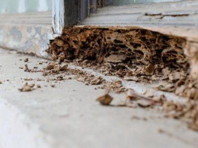 A Beginner's Guide Into Termite Control