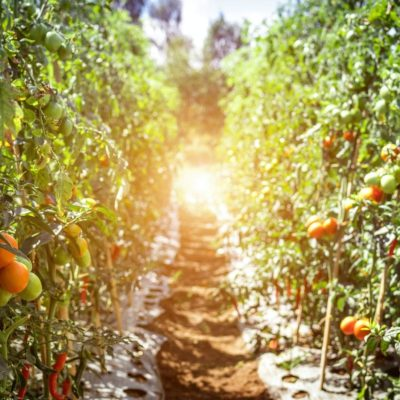 Quarantine 101: Quick and Easy Gardening Tips for Starters