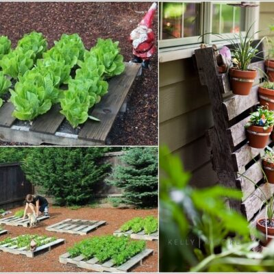 Must-Try Economical DIY Garden Ideas