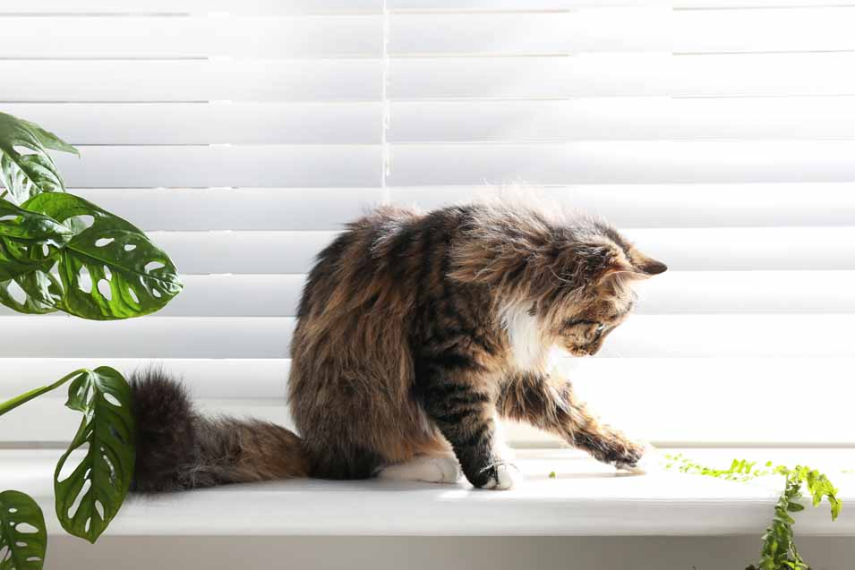C:\Users\PC\Downloads\cat-proof-blinds.jpg