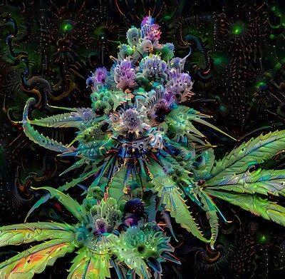 Sativa, Marijuana, Plant, Cannabis, Weed, Leaves, Pot