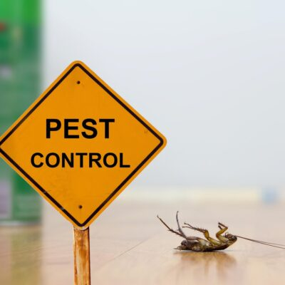 Essential Tips to Control the Entry of Pests in your Home