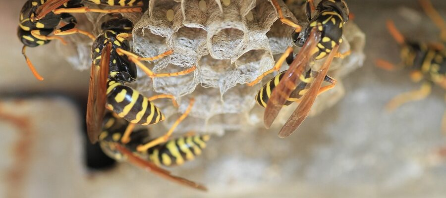 Why should you Leave Wasp Control to the Professionals